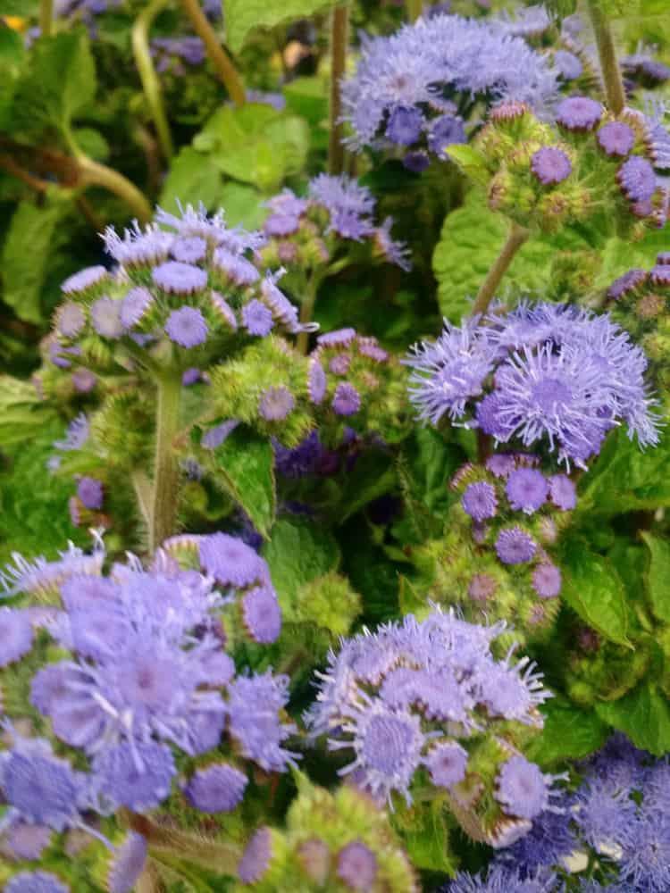 flowers (7)