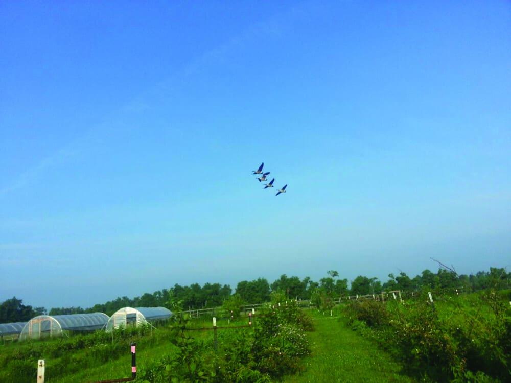 Farm Sky