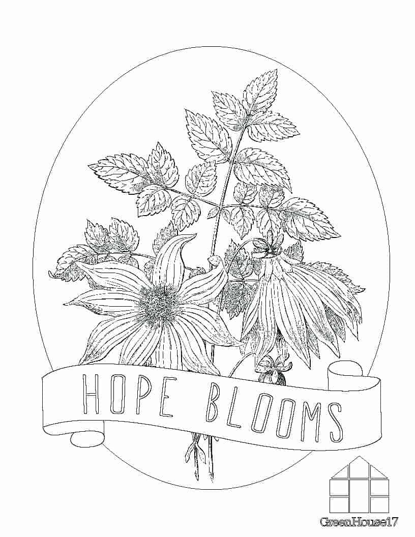 Coloring Pages GreenHouse17 Page 1 Hope Blooms