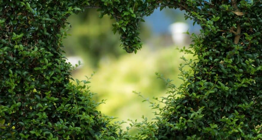 heart cut out of bush